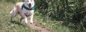 Kosze na psie kupy – zadbaj o czystość
