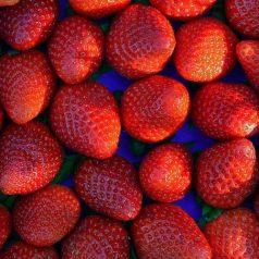 Uprawa truskawek w ceny sadzonek