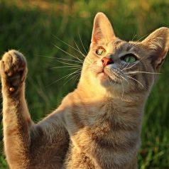 Bezzbożowowe karmy dla kotów – co trzeba o nich wiedzieć?